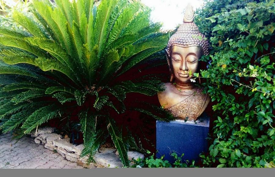 resto avec jardin montpellier