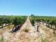 Wine Tour autour de Montpellier